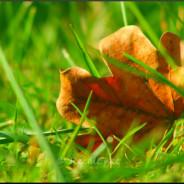 Coloris orangés
